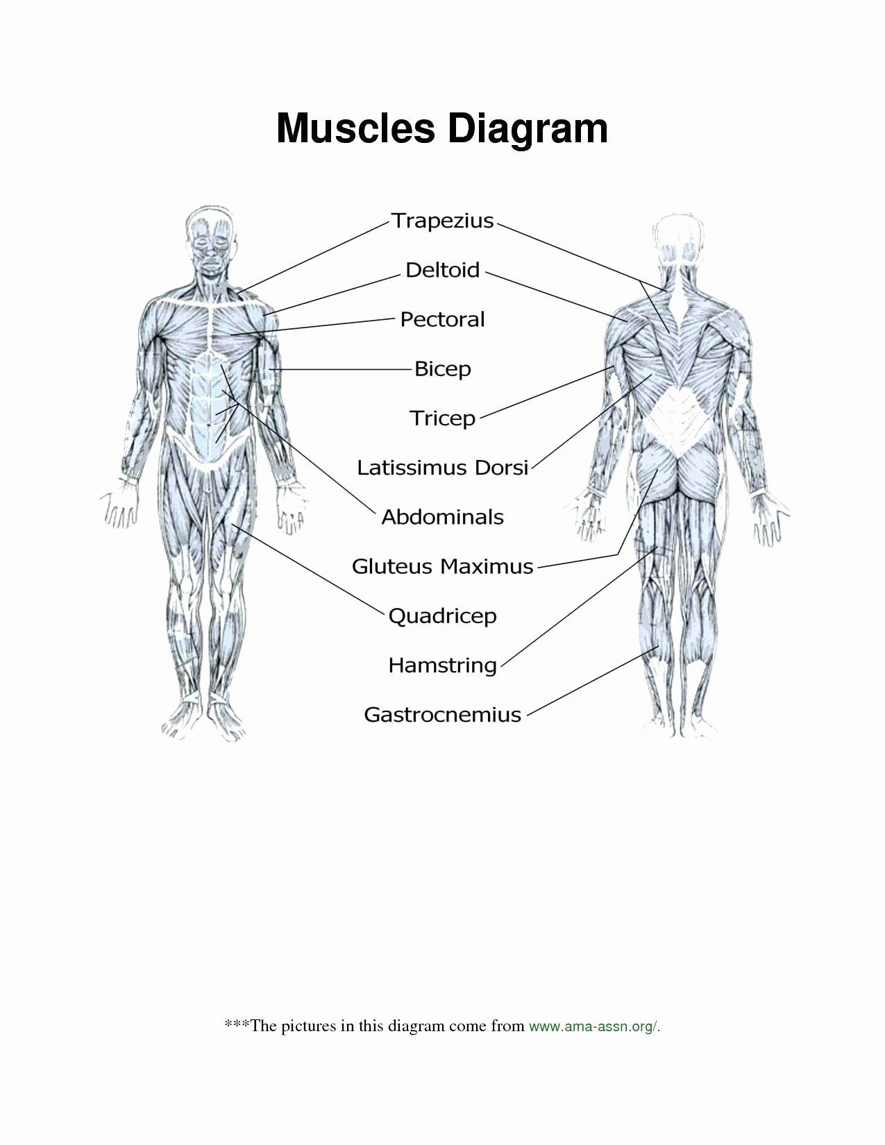 50 The Skeletal System Worksheet