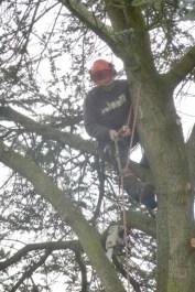 2-Dan in tree