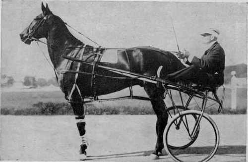 The Pacing Horse