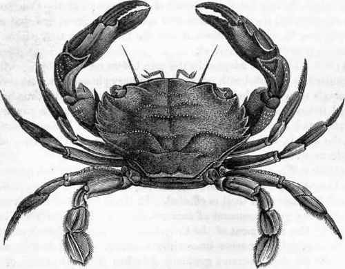 Crab Anatomy External - Best Crab For Food 2018