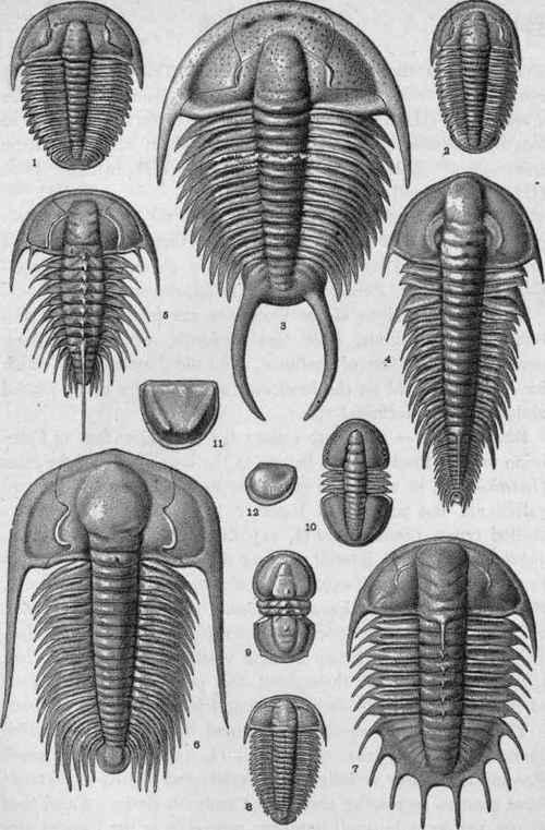 Plate III.   Cambrian Crustacea.