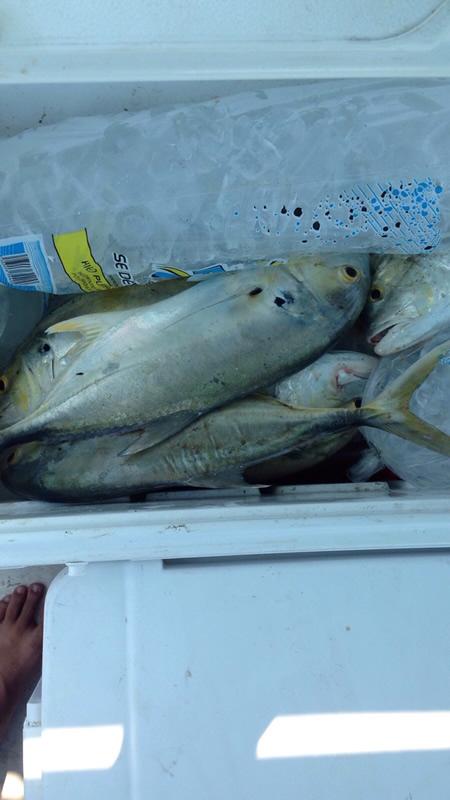 tour de pesca en la bahia de chetumal (7)