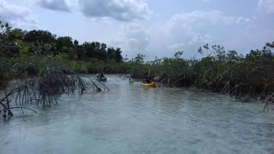 kayaking-estero-chac-chetumaltours.com (6)