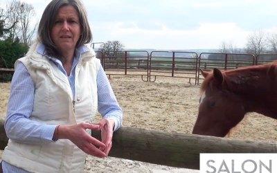 30 secondes pour découvrir le cheval médiateur