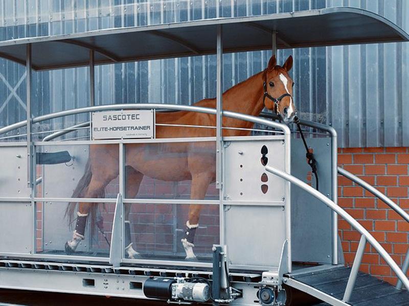 tapis de marche pour chevaux cheval