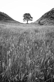 Hadrian_Tree_chevaugeon_(3_of_6)