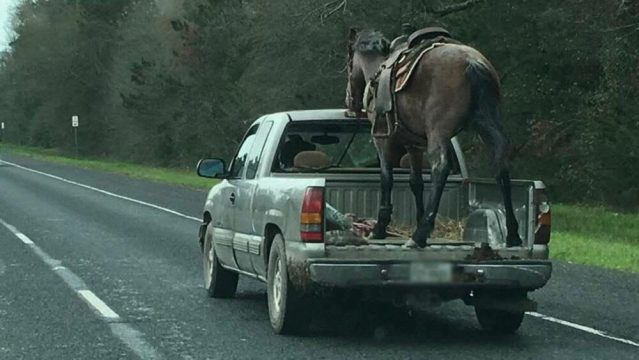 Chevrolet Silverado with Horse Circa March 2019
