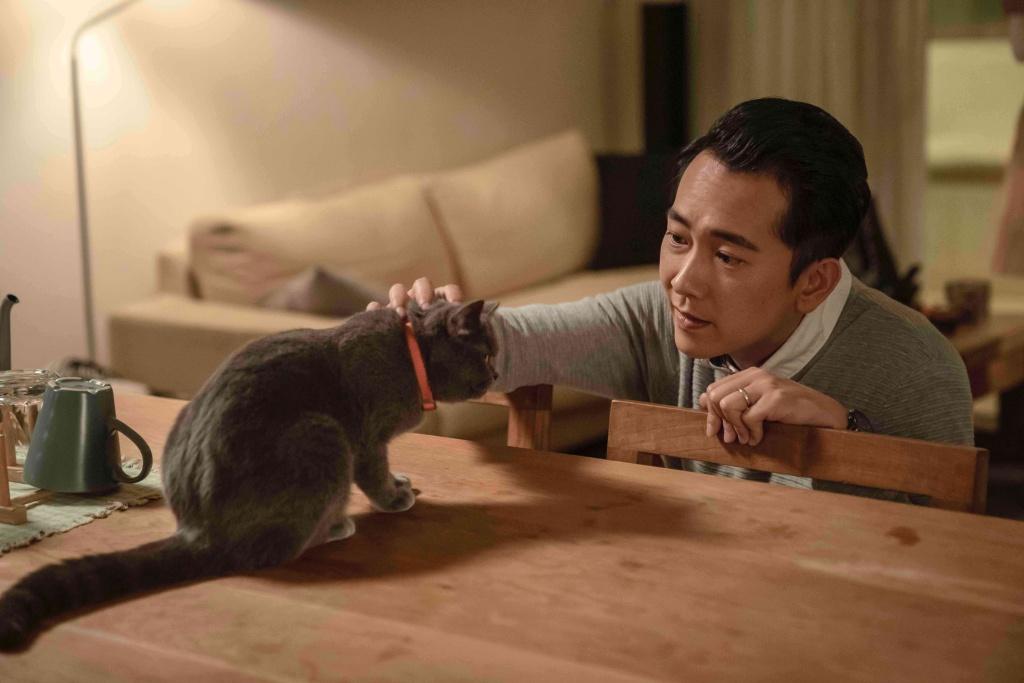 施名帥在《黑喵知情》中與英國短毛貓麒麟互動