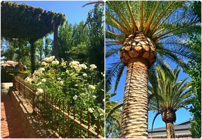 Palms and roses