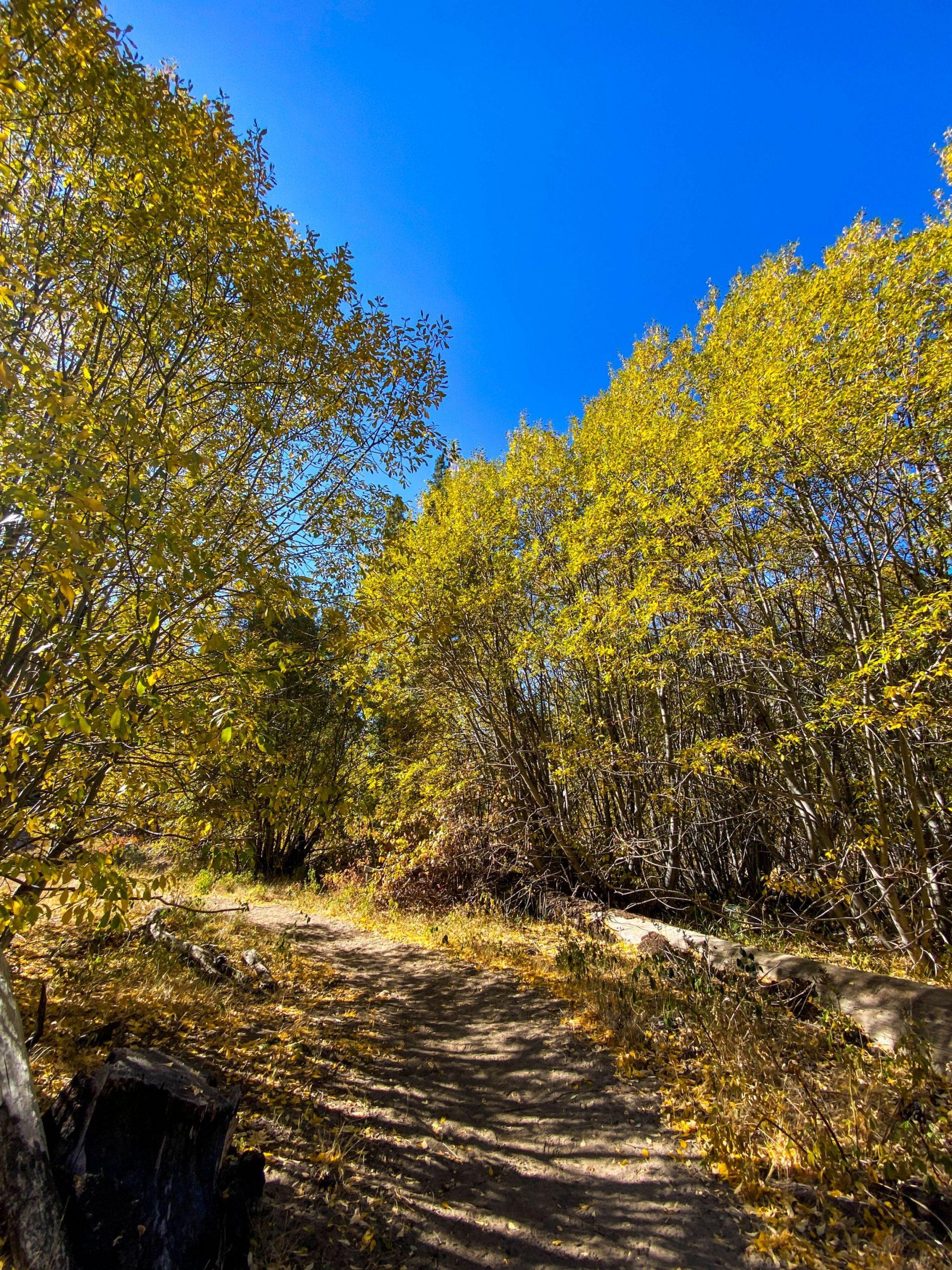 Gorgeous fall foliage at Van Sickle Bi-State Park.