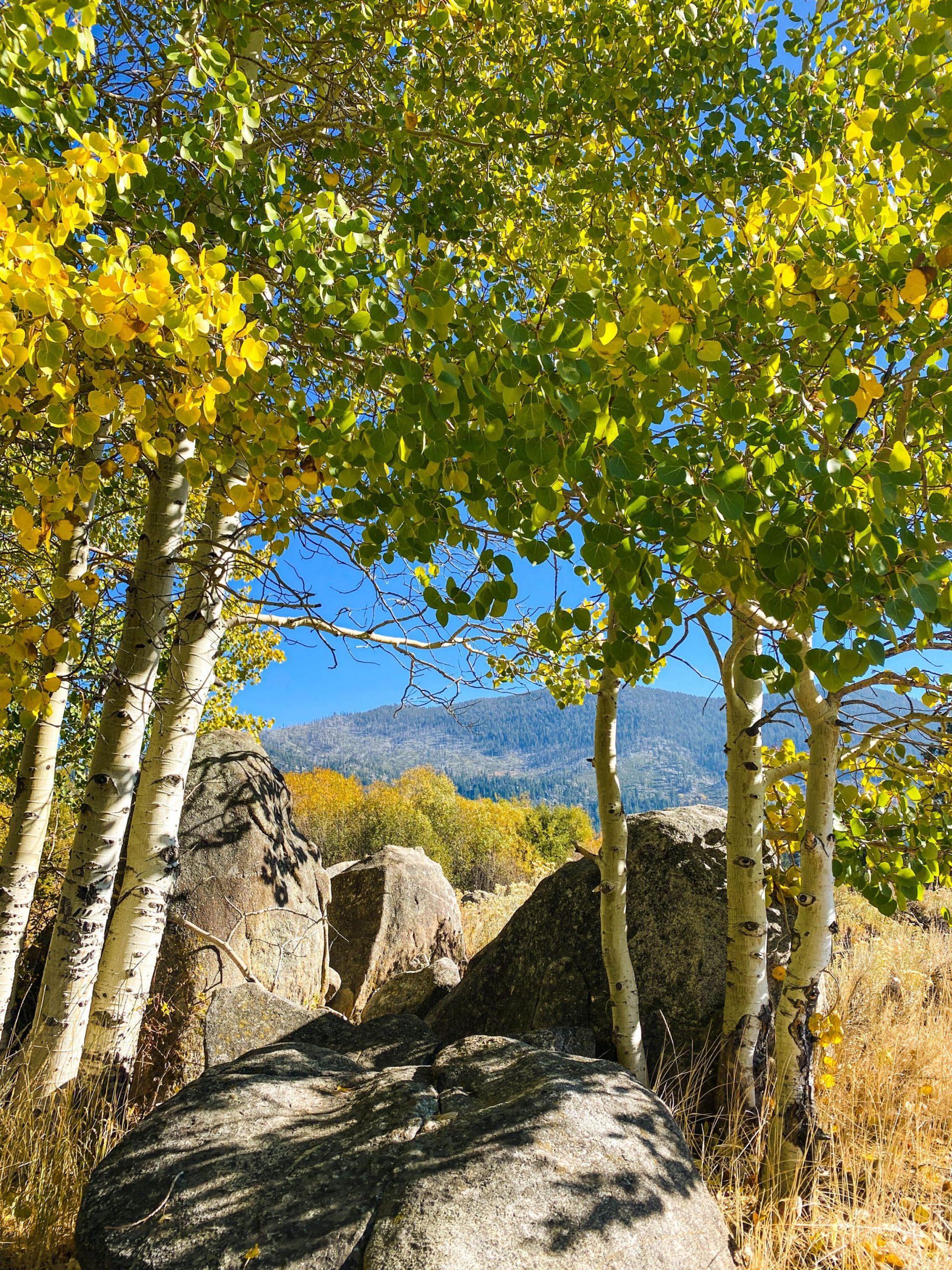 Lake Tahoe fall foliage