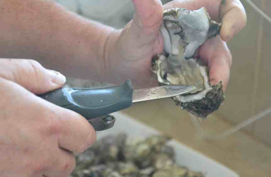 oysters (7)
