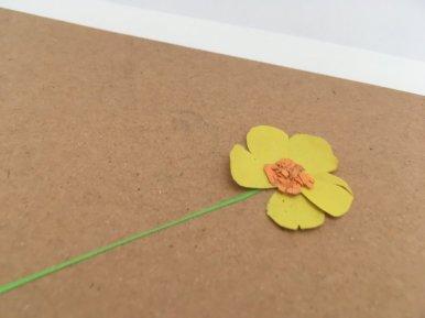 carte herbier papier (13)