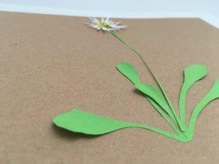 herbier en papier paquerette