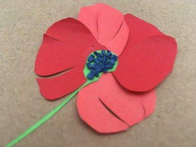 herbier en papier fleur coquelicot