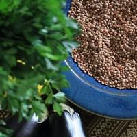Rummaniyeh | Aubergine, Lentil, Pomegranate