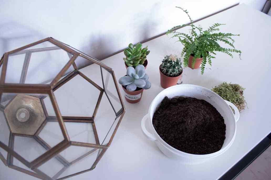 materiel pour la realisation du terrarium - Do it yourself : composer son propre terrarium