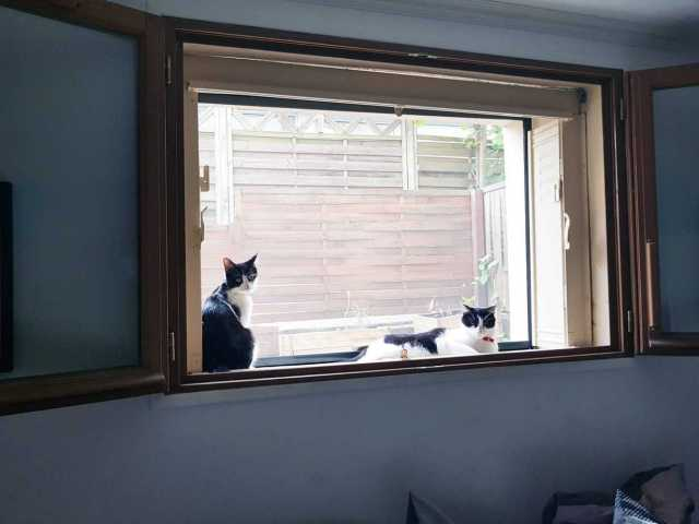 chats a la fenetre Avosdim 2048x1536 - Avosdim, un site web spécialiste de la fenêtre