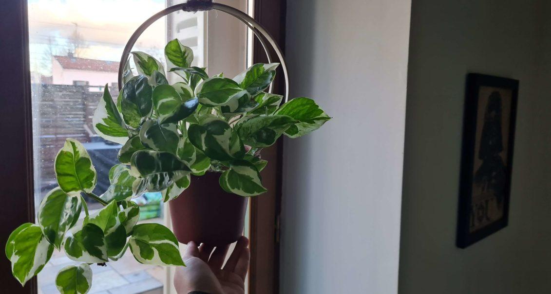 DIY fabriquer un support en bambou pour les plantes