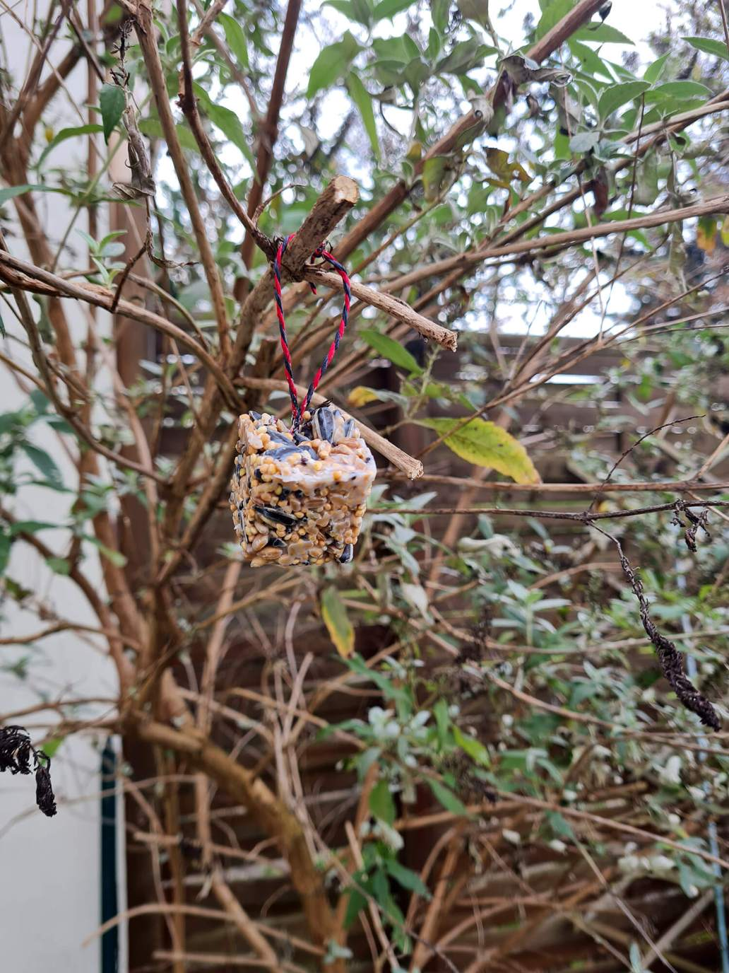 20210108 133545 - 3 DIY pour nourrir les oiseaux dans le jardin