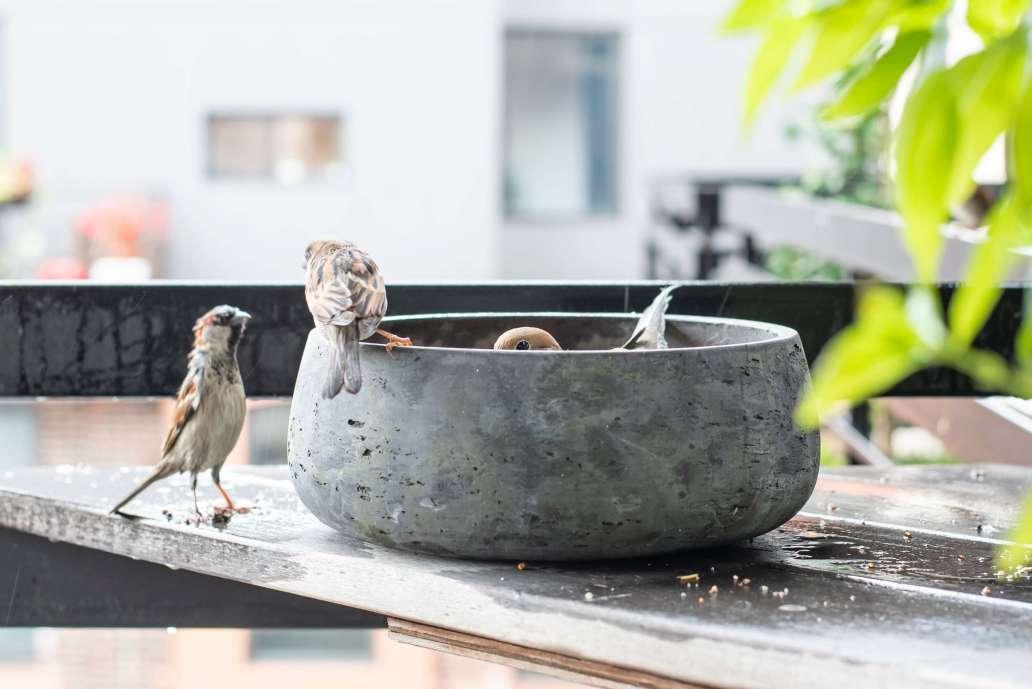 amin hasani HGGN4IqZhnI unsplash 2 2048x1367 - 3 DIY pour nourrir les oiseaux dans le jardin