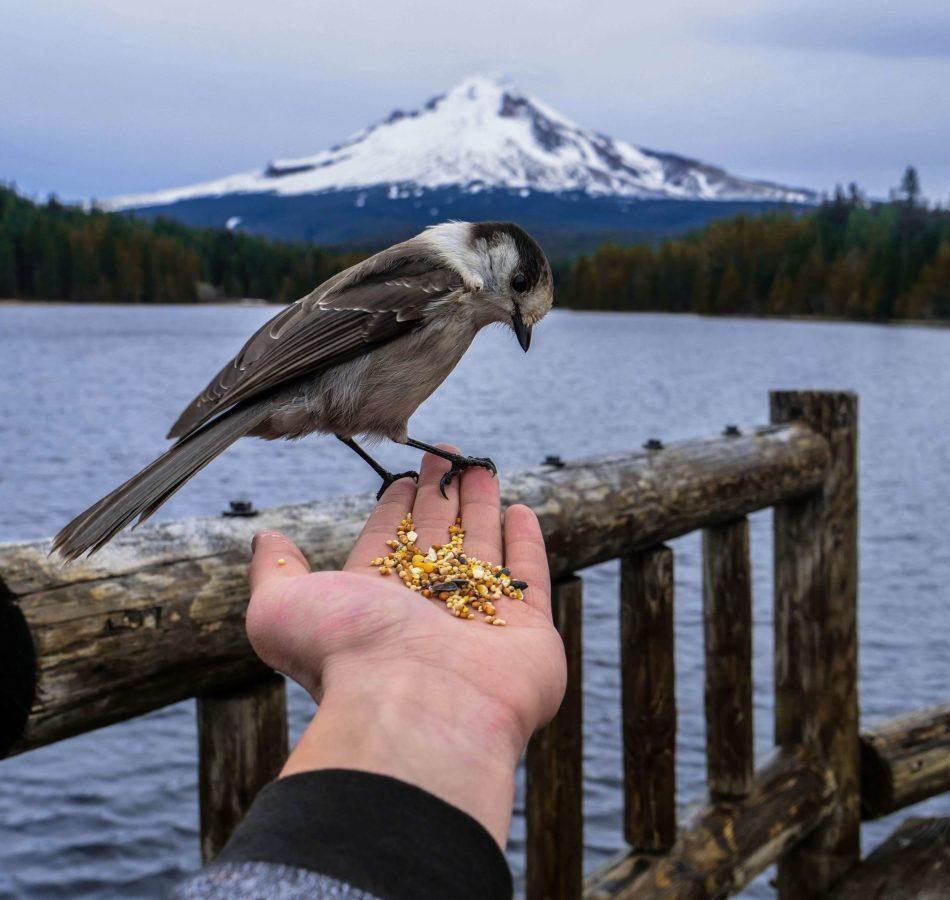 oiseau sur main chargé de graine