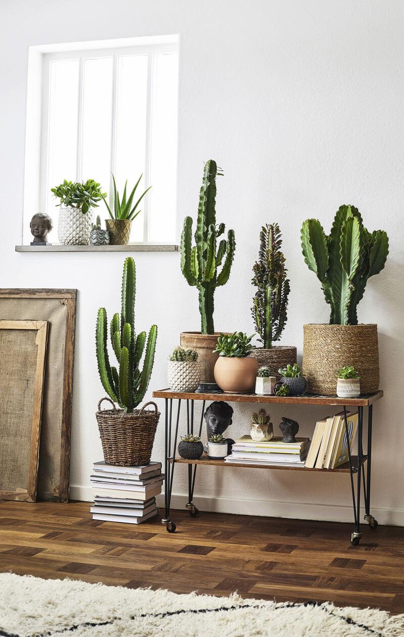 salon cactus 2 - Tendances meubles et décoration 2021 : le grand décryptage