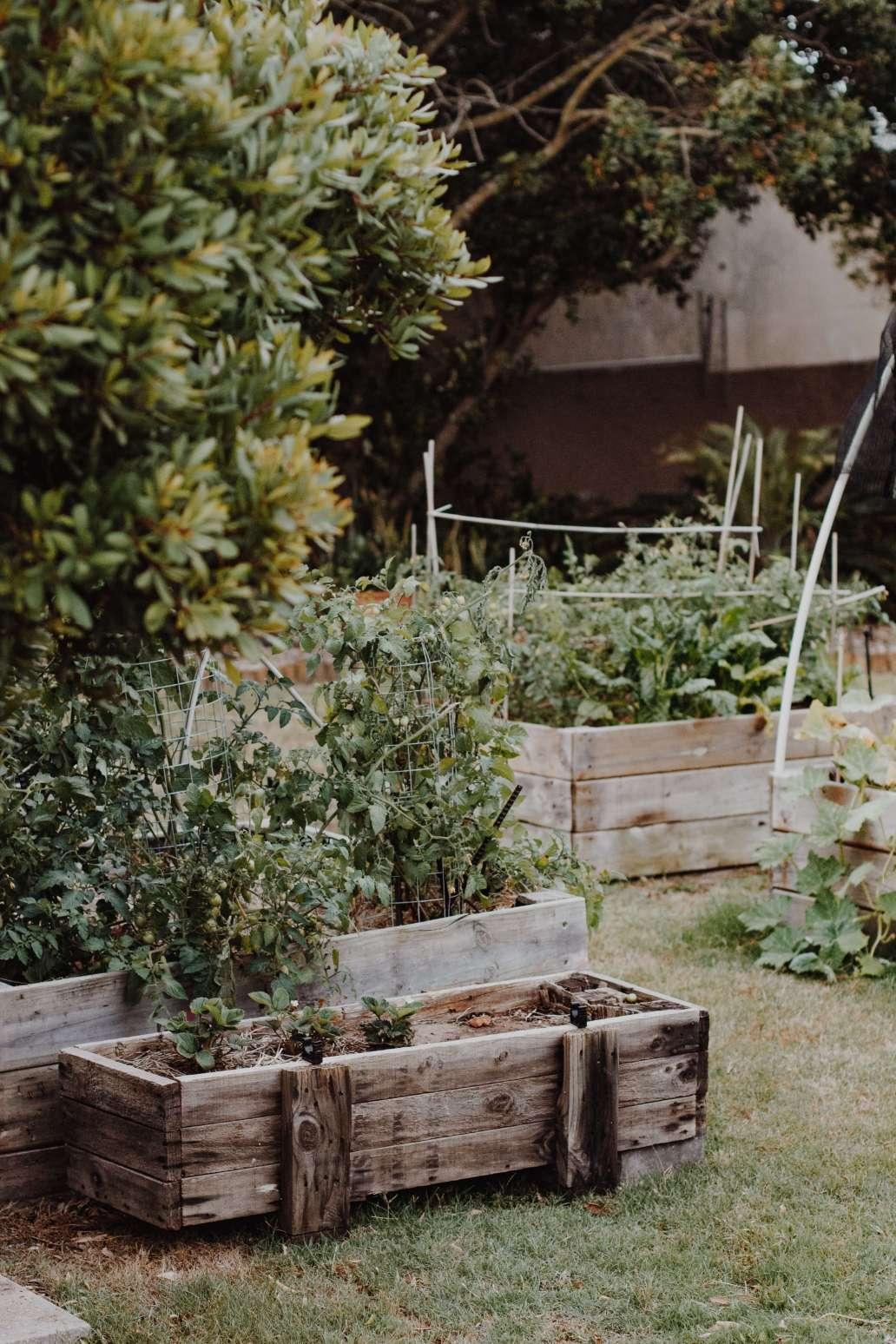sincerely media Agr1YTrzYPI unsplash 2 1365x2048 - Adopter une nouvelle manière de cultiver avec la permaculture