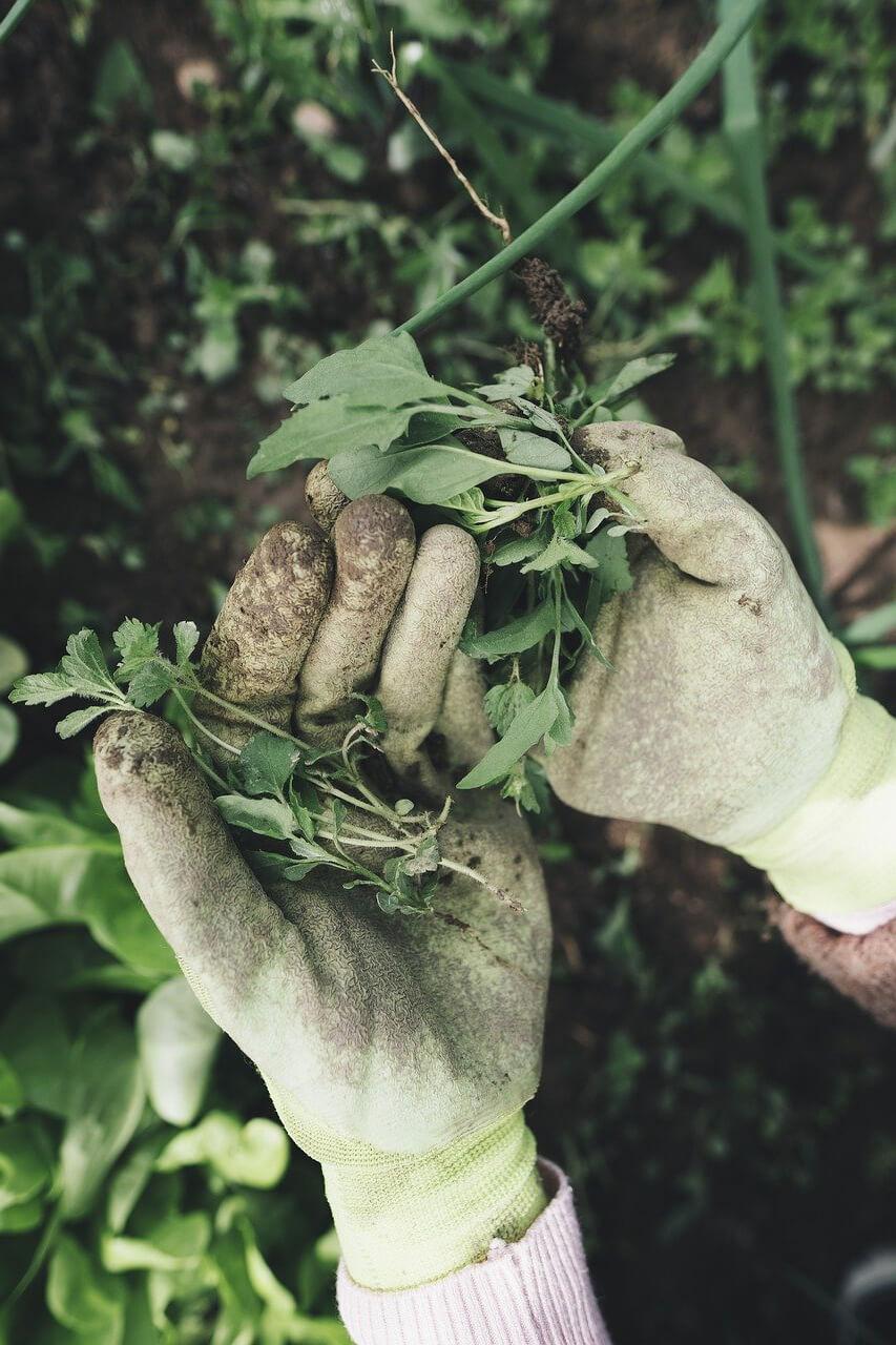 gardening 2518377 1280 2 - Comment aménager et préparer son jardin à l'arrivée du printemps