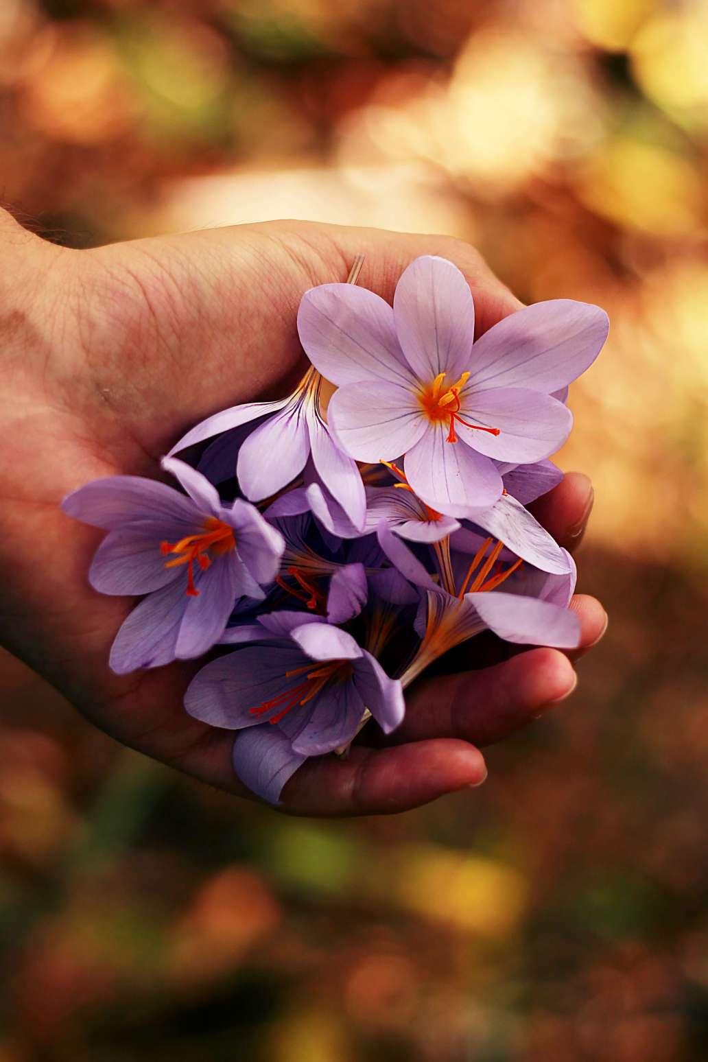 roberta sorge UvVVnUmW2mQ unsplash 2 1365x2048 - Comment aménager et préparer son jardin à l'arrivée du printemps