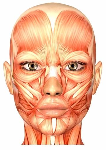 Gesichtsyoga und Muskulatur