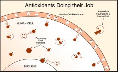 antioxidants-resized-600.gif