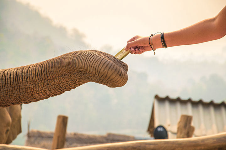 elephant-sanctuary2