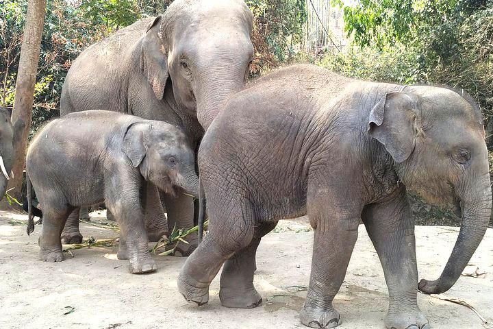elephant-sanctuary4
