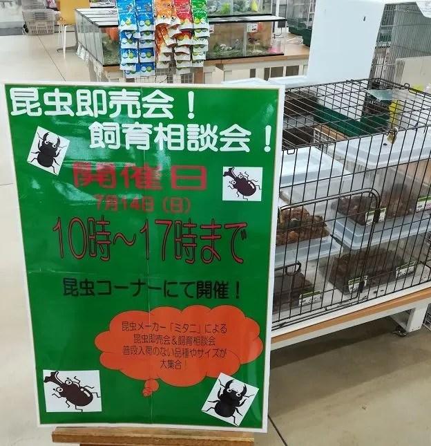 ジョイフル本田さんで、昆虫即売会。