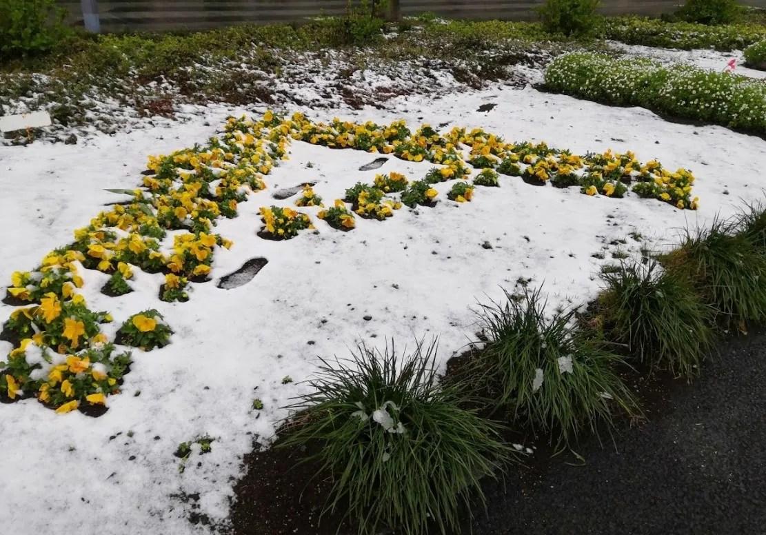 2020/03/29、千葉ニューでも雪。01