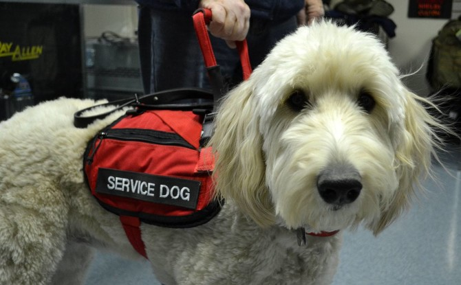 Guest Commentary: On Why Requiring Licensing of Service Animals is Impractical