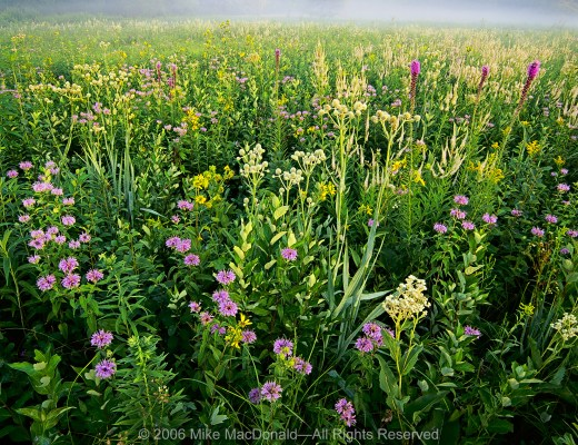 The July prairie explodes with diversity here at Wolf Road Prairie in Westchester, Illinois.
