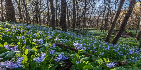 O'Hara Woods PreserveRomeoville, Illinois