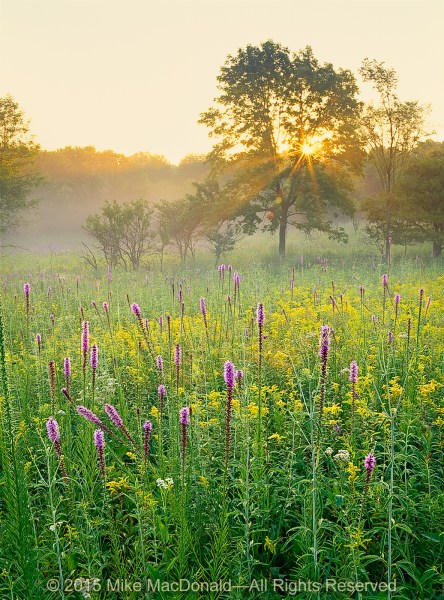 Early rays of summer sun filter through the trees and into the vibrant prairie at Spears Woods in Willow Springs, Illinois.*