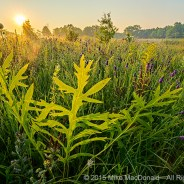 Chicago Nature Adventure Info & News – 07/20/2017