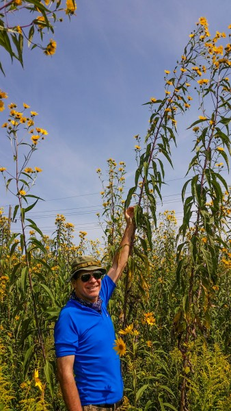 Mike MacDonald and a 13-foot sawtooth sunflower at Wolf Road Prairie in Westchester, Illinois.*