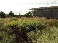 Lurie Garden8-21-2011 006