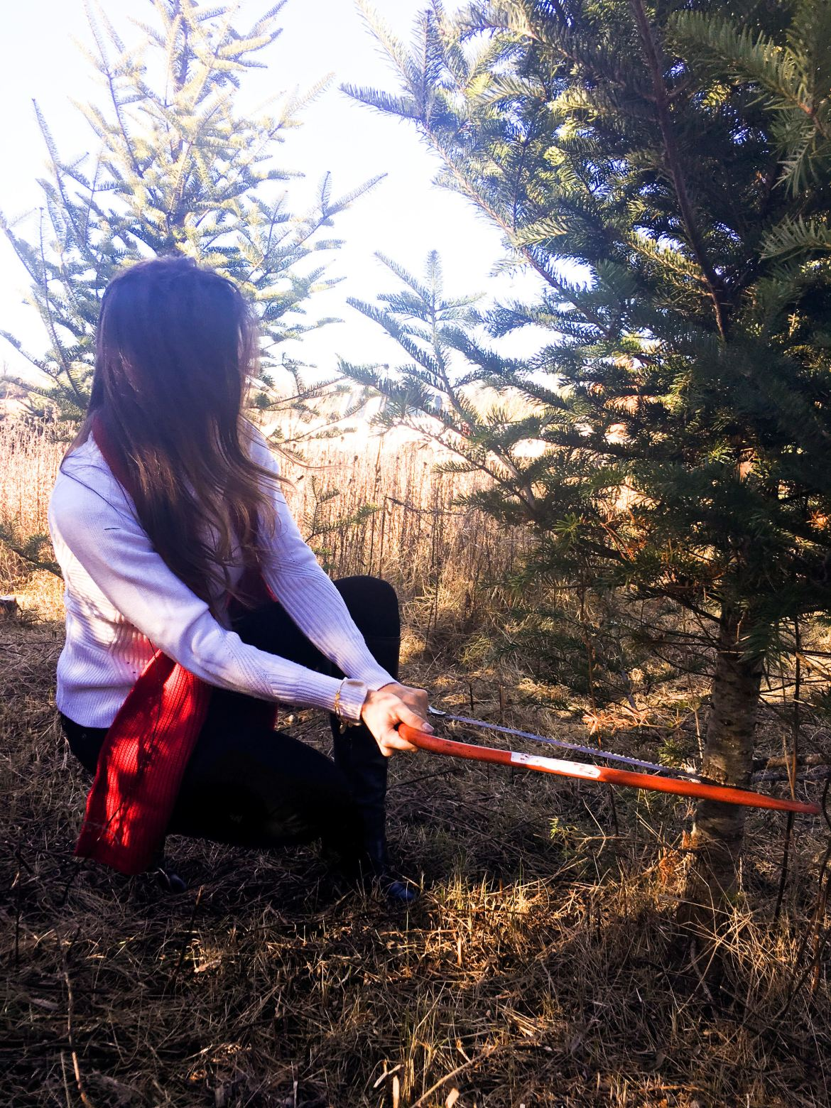 how to cut down a christmas tree
