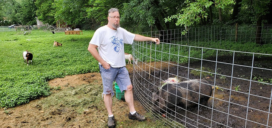 """One of Leise's hogs is named """"Hamilton."""""""