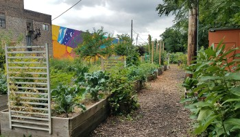 Several garden plots with blooming produce at El Paseo Community Garden.