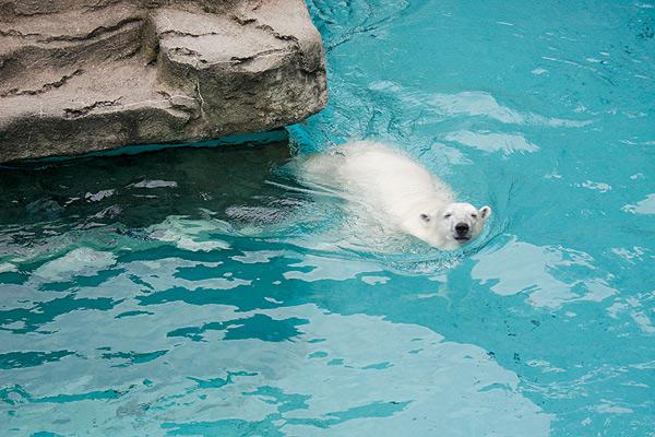 Bart Heird   Lincoln Park Zoo, 2001 N. Clark   August 22