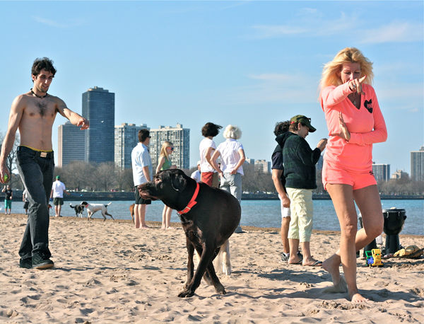 <em>What's A Dog To Do?</em> Montrose Beach, March. By Bill Guerriero, 43, copy editor, Andersonville