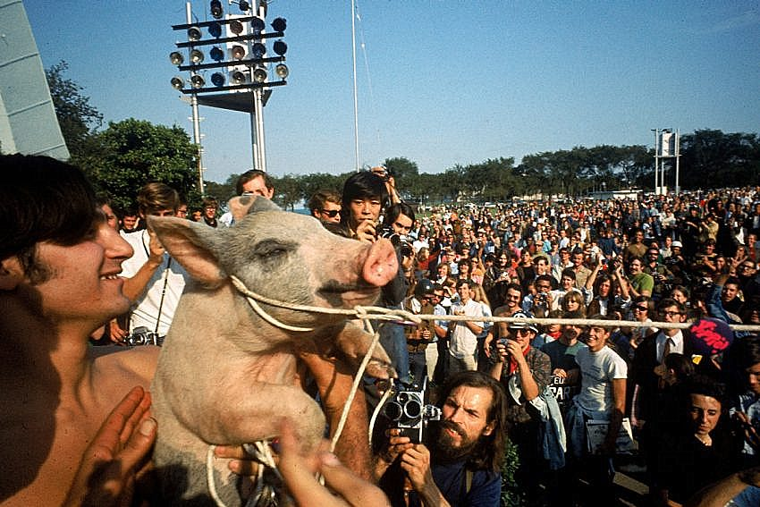 Phil Ochs paid an Illinois farmer for Pigasis, the pig the Yippies tried to nominate as president.