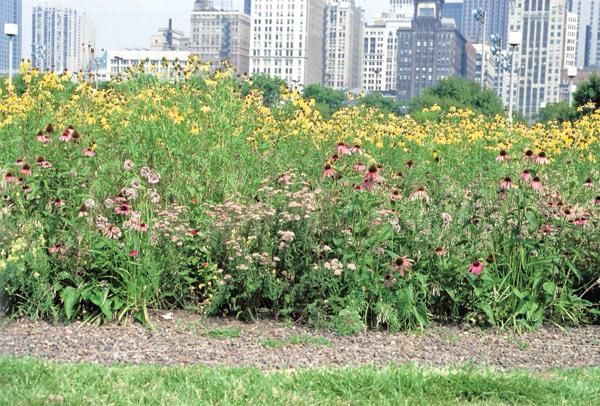 Wildflower Works